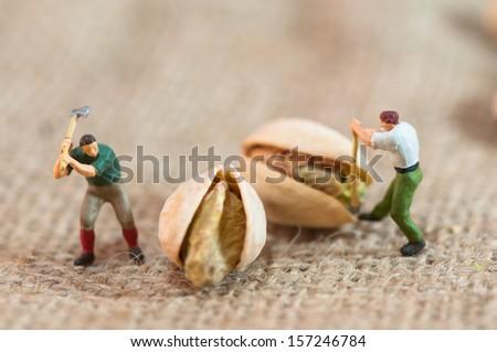 Miniature loggers cut up pistachios. Macro photography - stock photo