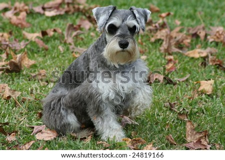 Miniature posing for the camera. - stock photo
