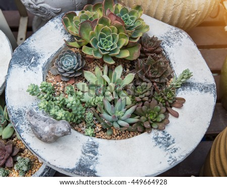 Miniature succulent plants - stock photo