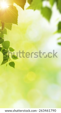Minight haze in the forest, natural backgrounds - stock photo