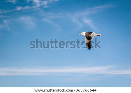 Minimalist Seagull Flying Against Beautiful Blue Sky Background With Side View In The Daytime - stock photo