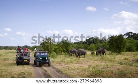 Minneriya, Sri Lanka - June 19, 2014: Tourist make game drive in Mynneriya national park. This park is famous to spot herds of wild asian elephants (specie elephas maximus maximus) - stock photo