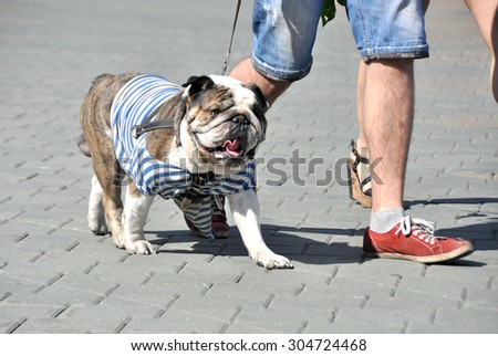 MINSK, BELARUS AUGUST 2, 2015: Paratrooper dog walking during the celebration of the Paratroopers VDV Day on 2 August 2015 in Minsk. - stock photo