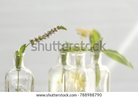 mint flower in bottle and other plants out focus