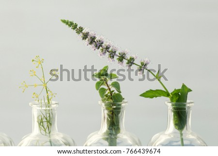 mint flower, mint, parsley flower and oregano in bottles of  oil