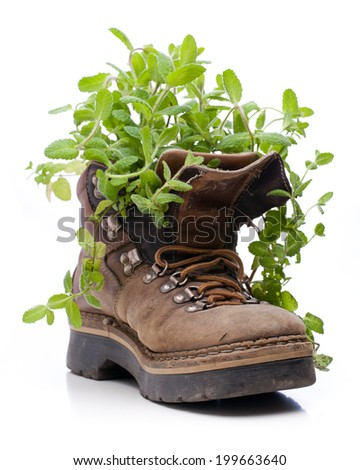 Mint growing from old hiking boots - stock photo