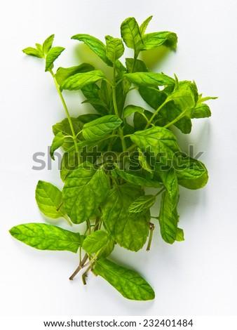 mint herb - stock photo