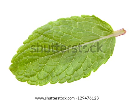 Mint herb leaf heap isolated on white