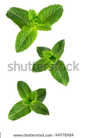 Mint isolated on the white background. - stock photo