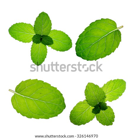 mint isolated on white background - stock photo