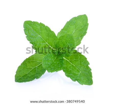 mint leaf on white background - stock photo