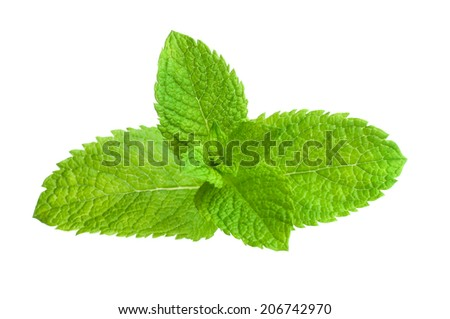 Mint leafs isolated on white background  - stock photo