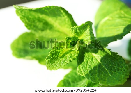 Mint leaves, closeup - stock photo