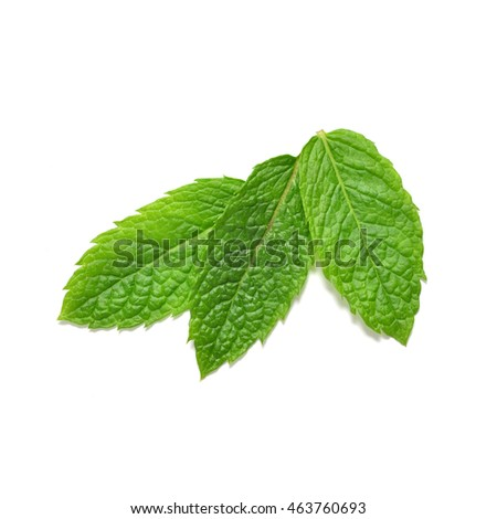 Mint leaves from above isolated on white background