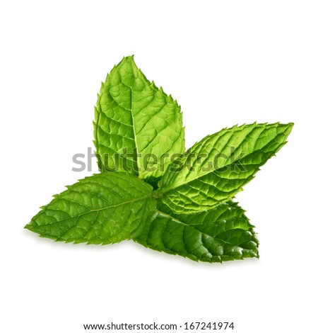 Mint leaves including clipping path - stock photo