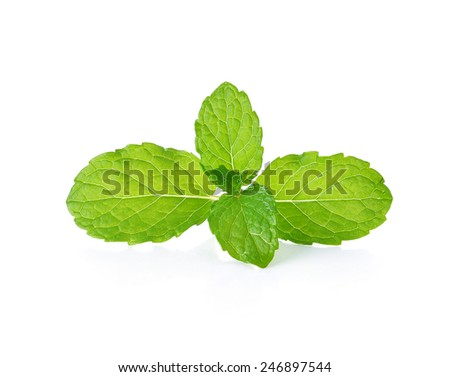 mint leaves isolate on white background - stock photo