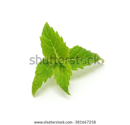Mint leaves isolated on a white background