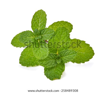 Mint leaves isolated with white on background - stock photo