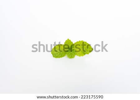 mint leaves  on white background - stock photo