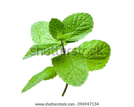 Mint leaves sprout isolated on white background