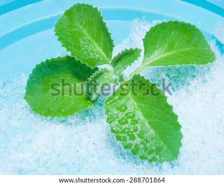 mint leaves wet ice lies on a blue background - stock photo