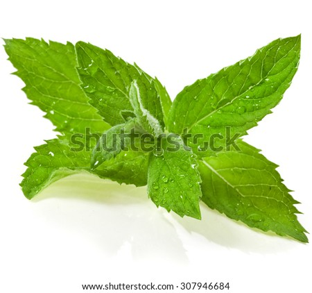 mint leaves with water drops isolated on white background - stock photo