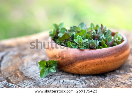 Mint  on natural wooden background, peppermint, selective focus, close up