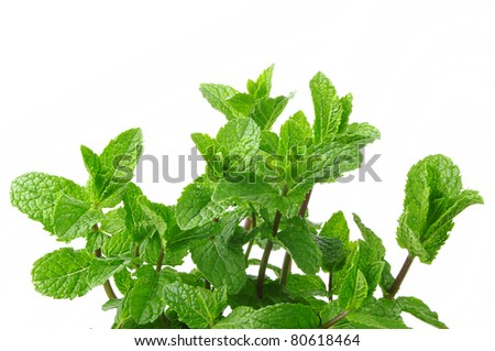 mint on the white background - stock photo