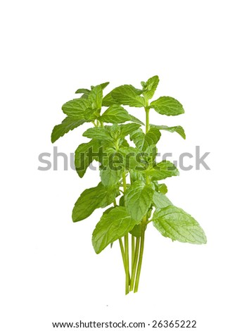 Mint sprigs on white background - stock photo