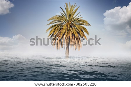 Mirage - palm and water - background
