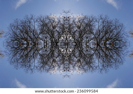 Mirror image tree in a blue sky - stock photo