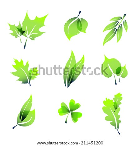 Miscellaneous summer leaves icons, isolated on white.