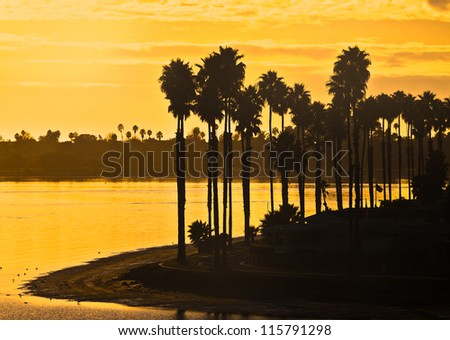 Mission Bay Palm Trees at Sunset Located in Sunny San Diego, Southern California - stock photo