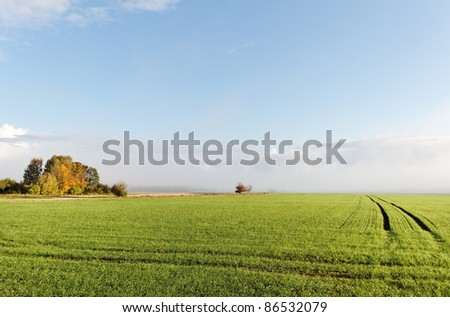 Mist above green field in a sunny morning. - stock photo
