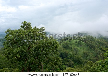 Mist covered Mountains with wild forest - stock photo