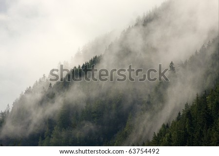 Mist covering the pine trees of a mountain - stock photo
