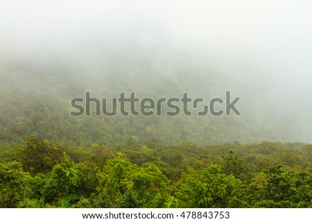 Mist in the forest at Khao Yai national park (a unesco world heritage site), Thailand.