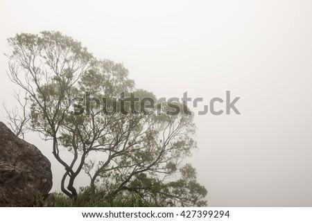 Mist in the mountain - stock photo