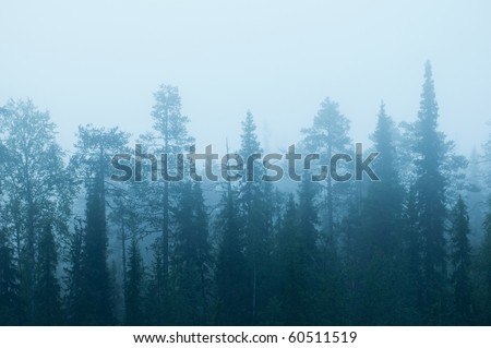mist in the mountain forests