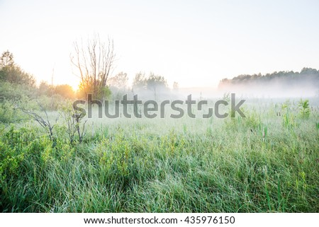 Mist on a bog at dawn - stock photo