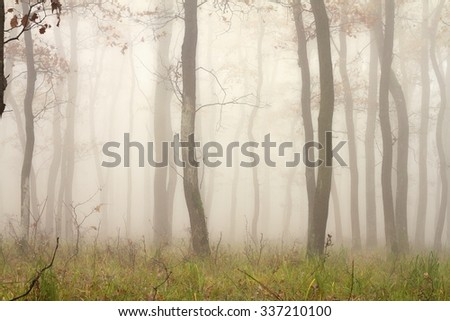 mist through the trees, beautiful forest view in fall season - stock photo