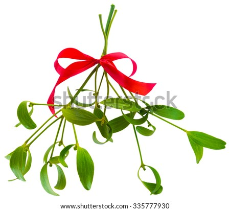 Mistletoe bunch hanged on red ribbon isolated on a white background - stock photo