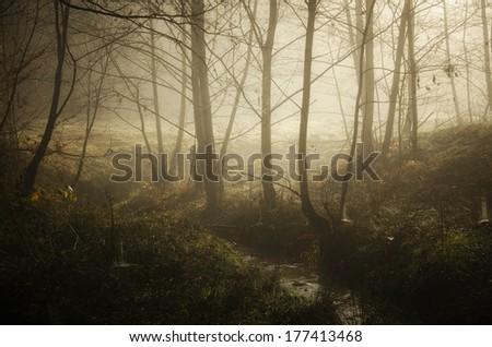 misty autumn morning on a small river with trees - stock photo