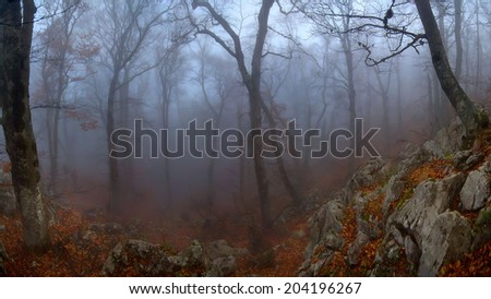 Misty autumn wood in Crimea