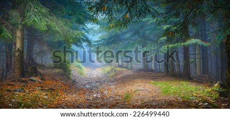 Misty Carpathian forest with old fir trees in a magic blue light - stock photo