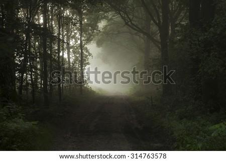 Misty darkness - stock photo