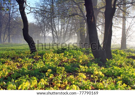Misty dawn at the edge of the forest in spring - stock photo
