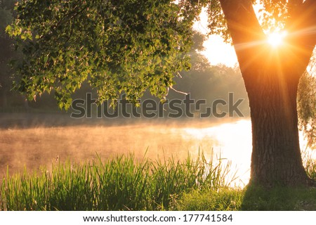 Misty dawn at the lake - stock photo