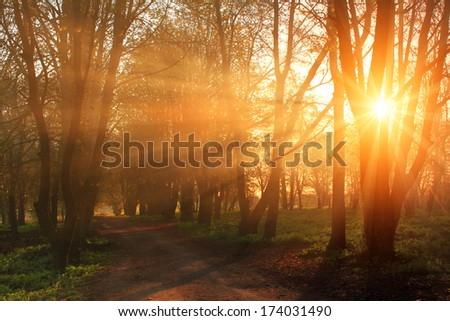 Misty dawn in the park in spring - stock photo