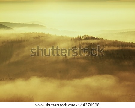 Misty daybreak in a beautiful hills. Peaks of hills are sticking out from foggy background, the fog is yellow and orange due to sun rays. The fog is swinging between trees. - stock photo
